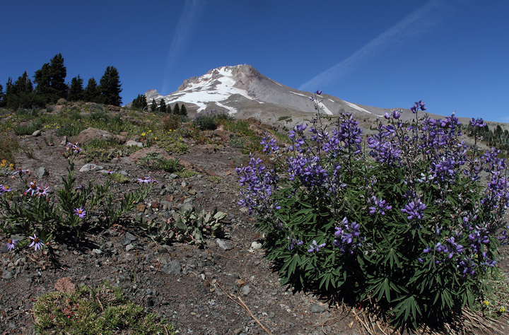Mount Hood near the timberline (9/2/2010). Photo by Bill Hubick.